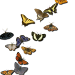 insects-2414736_1920